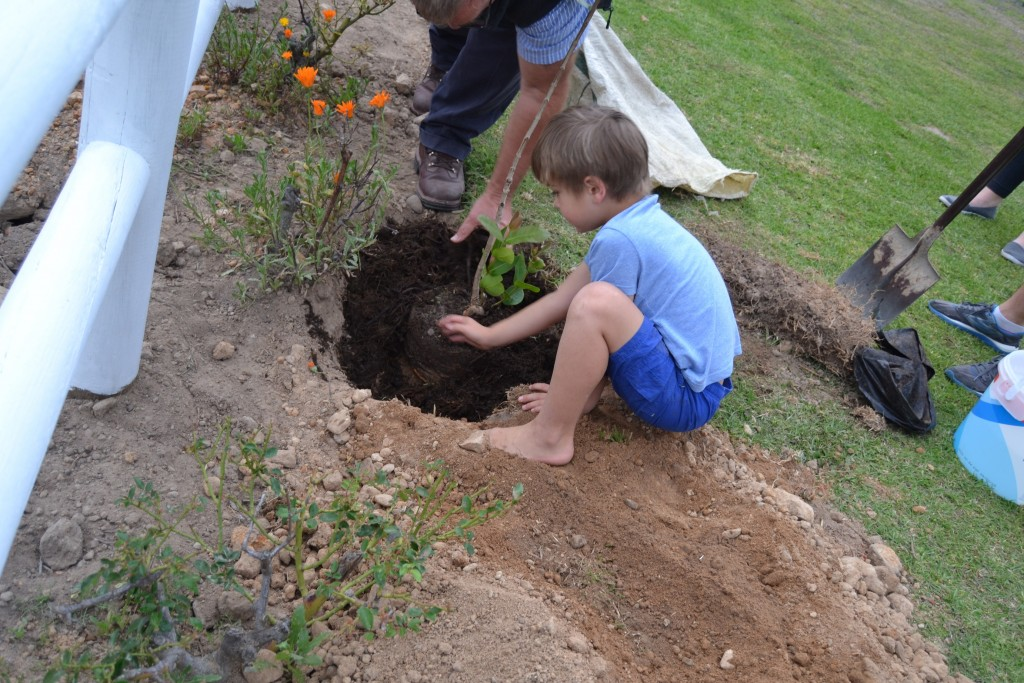 5 Year old Ethan chose to plant a Fig tree